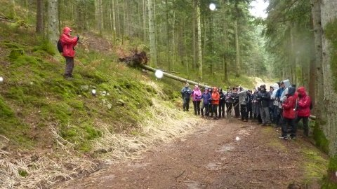 Photo des marcheurs devant l'arbre en travers du chemin