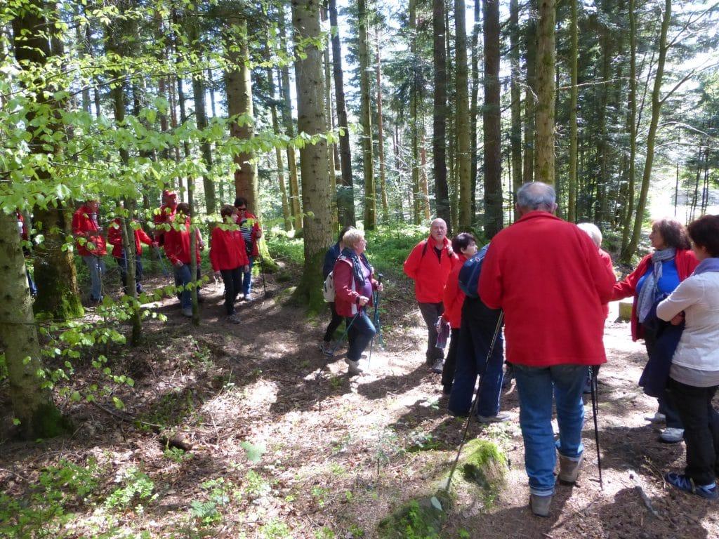 Les marcheurs en sous bois