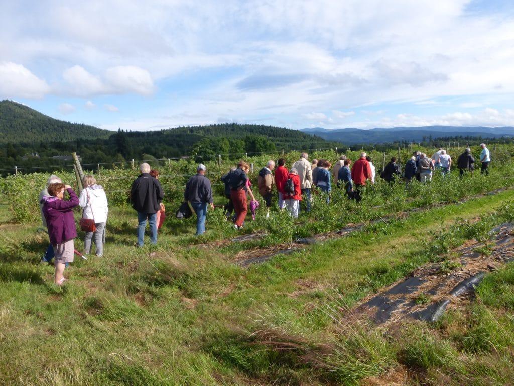 Photo des marcheurs avec vue sur la ligne bleue des Vosges