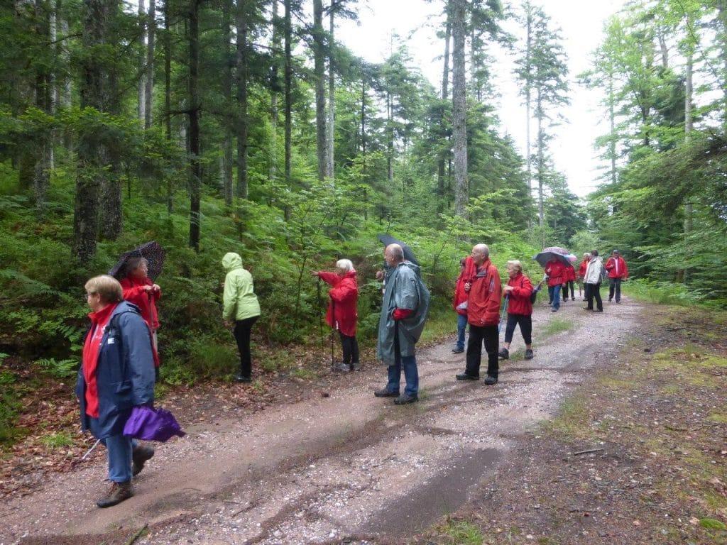 Photo des marcheurs dans la forêt