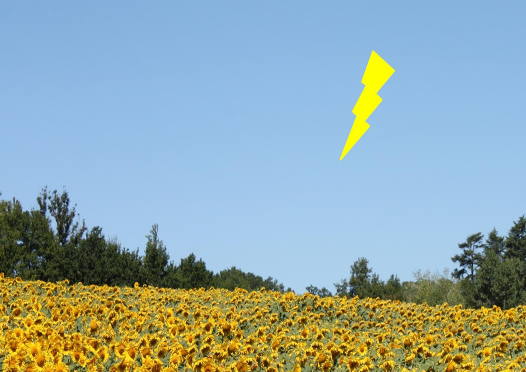 Photo d'un éclair sur un ciel bleu au dessus d'un champ de tournesols