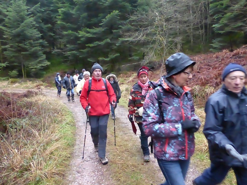 Les marcheurs sur chemin forestier