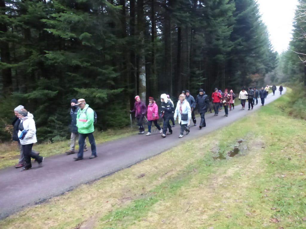 Les marcheurs en bordure de forêt