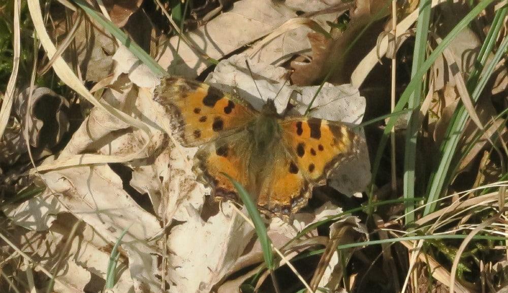 Photo d'un papilllon