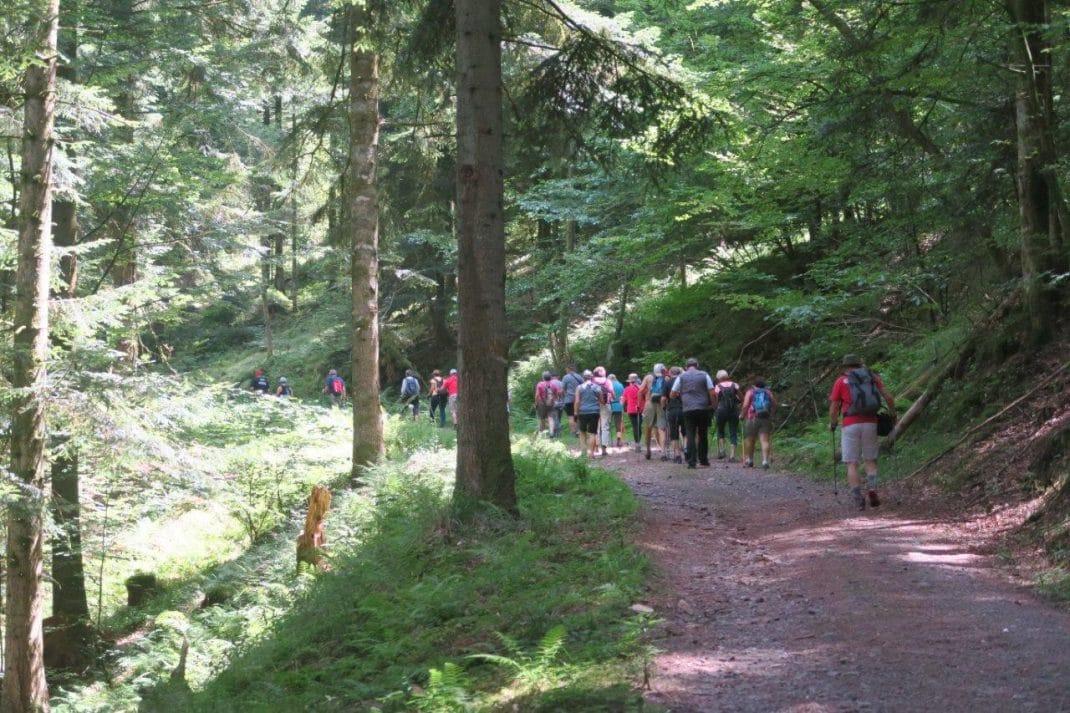 Photo des marcheurs dans les sous-bois du massif de la Bure