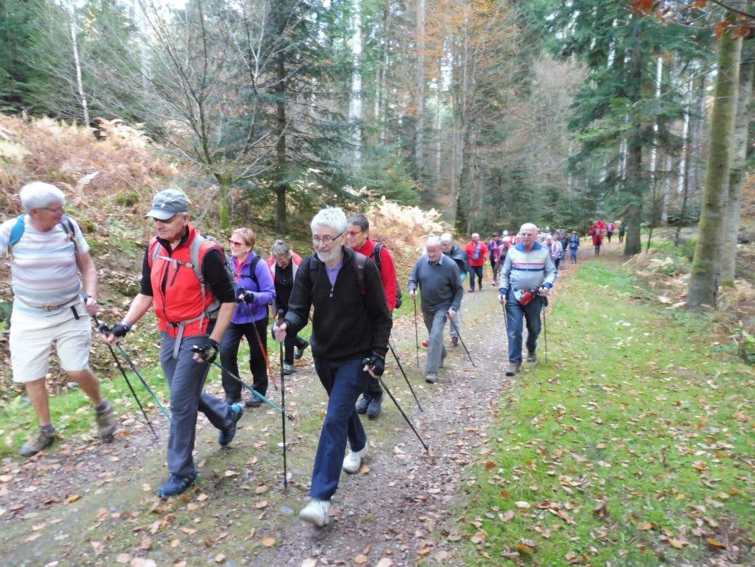 Photo des marcheurs sur le chemin forestier