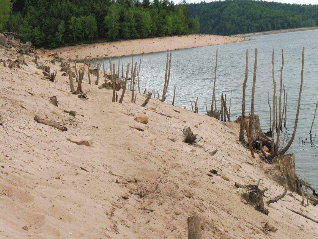 Des plages sont apparues au bord du lac et avec elles arbres et racines.