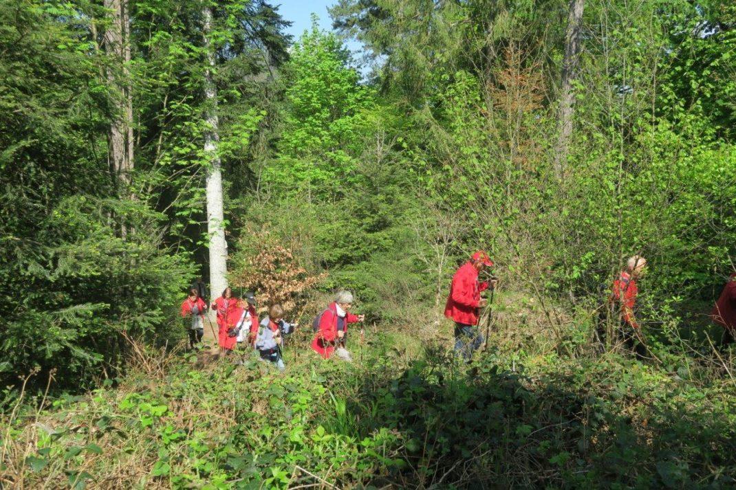Groupe sur l'ex sentier botanique