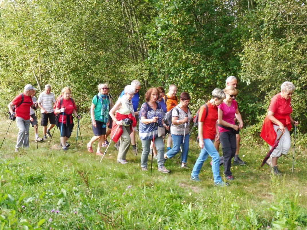 Photo des marcheurs à l'orée du bois