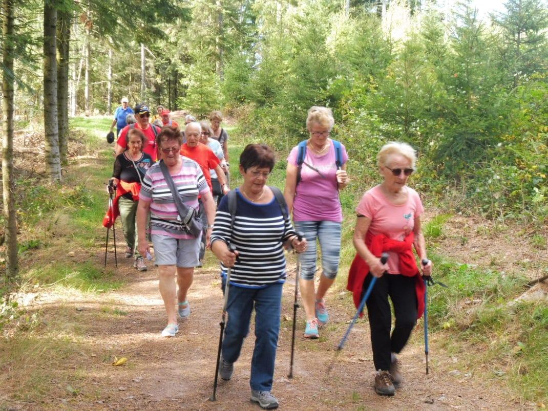 Les marcheurs sur un sentier forestier